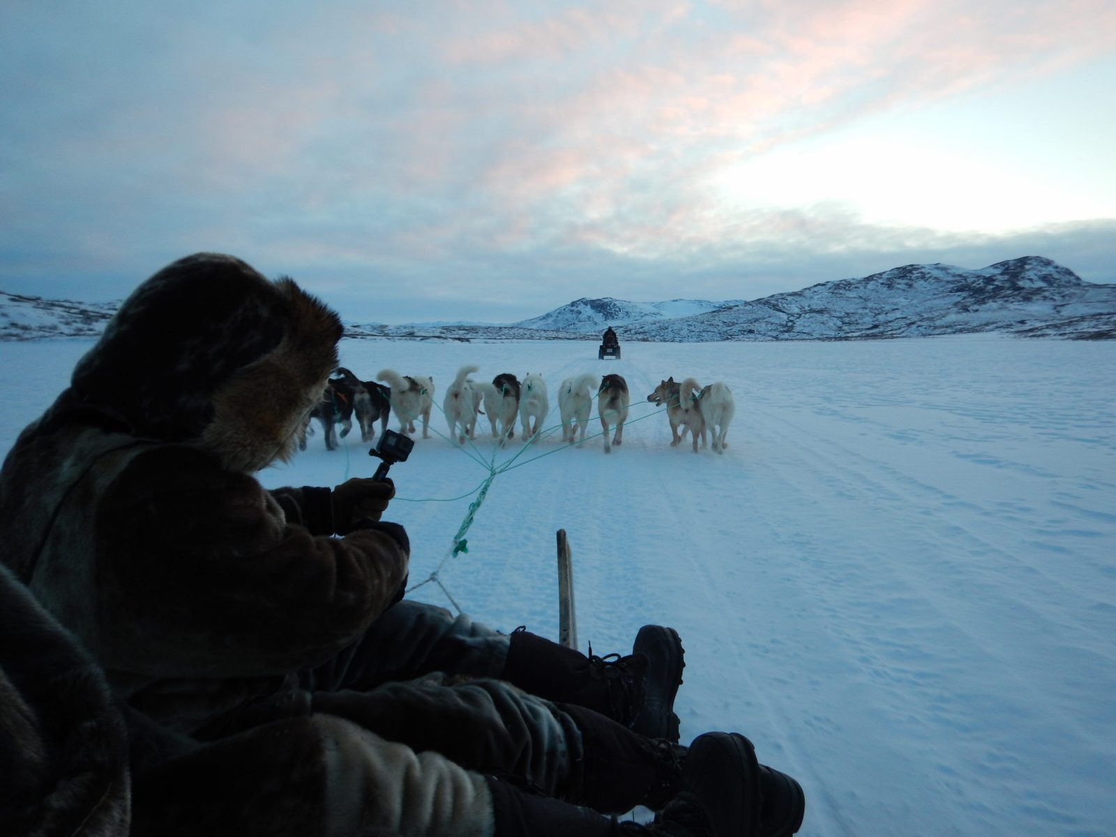 Dog-Sledding-in-the-Artic-scaled